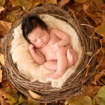newborn baby boy sleeping in a nest photographed by San Francisco Bay Area and Santa Barbara baby photographer Sarka Photography