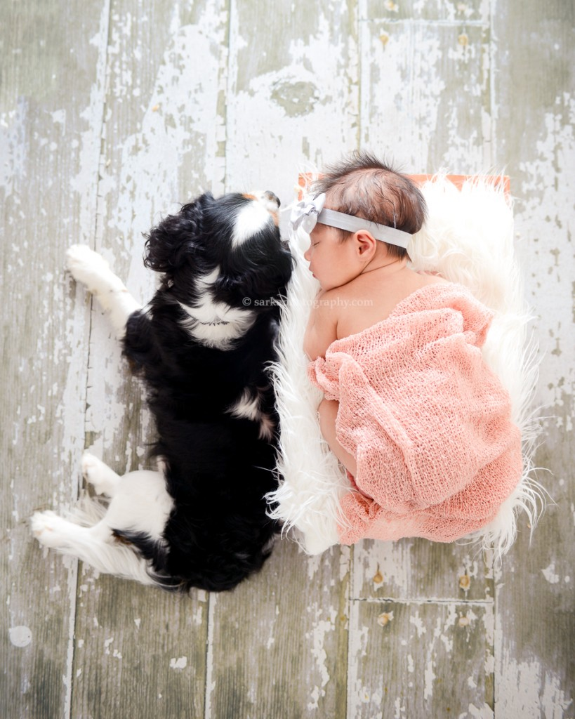 cavalier king charles spaniel laying next to newborn girl photographed by Santa Barbara and San Jose Baby photographer Sarka Photography