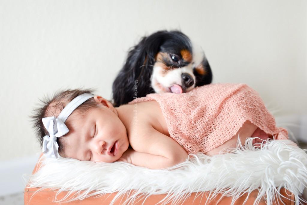 small dog kissing newborn girl photographed by Santa Barbara and San Jose Baby photographer Sarka Photography