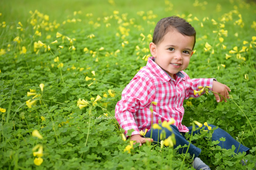 two year old boy sitting in a flower field in the spring photographed by San Mateo and Bay area family photographer Sarka