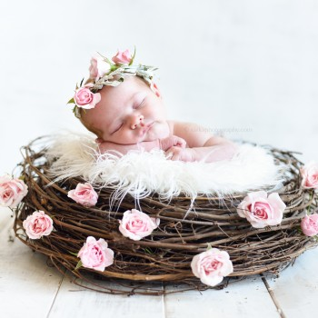 newborn baby girl sleeping in a birds nest wearing a rose flower crown photographed by Santa Barbara Montecito newborn and baby photographer Sarka photography